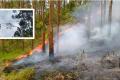 Vídeo: galhos na rede elétrica causam incêndio em São Ludgero