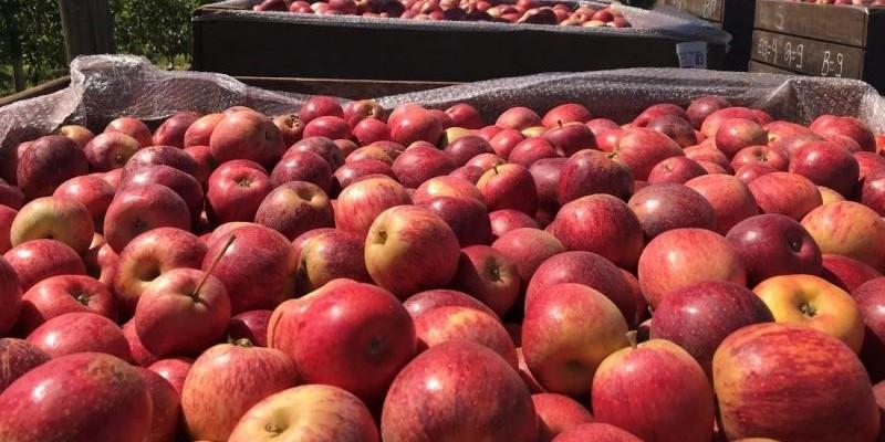Polícia Militar faz operação para prevenir crimes trabalhistas durante colheita da maçã na Serra de Santa Catarina