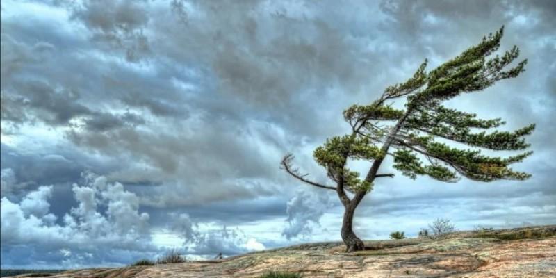 Rajadas de vento de até 70 km/h devem atingir Litoral de SC