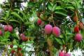 Pedidos de mudas frutíferas, nativas e ornamentais já podem ser feitos na Secretaria de...