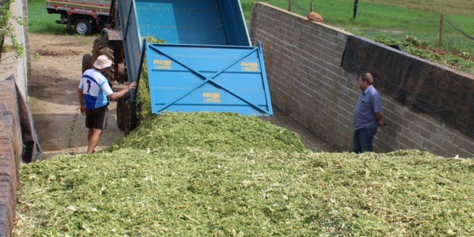 Tarde de Campo em São Ludgero ensina técnicas para aumentar a produção de milho e qualidade da silagem