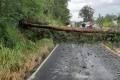 Queda de árvore bloqueou a SC-108 entre Urussanga e Orleans