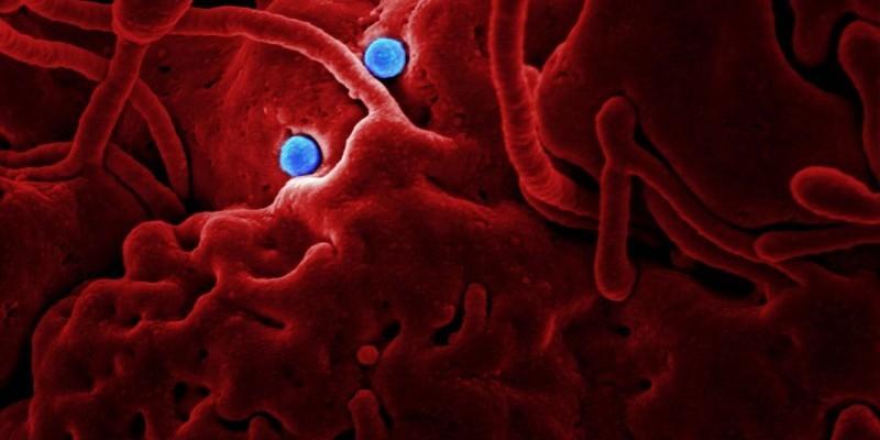 Tubarão compra dois mil testes rápidos de coronavírus; cidade possui 13 casos confirmados