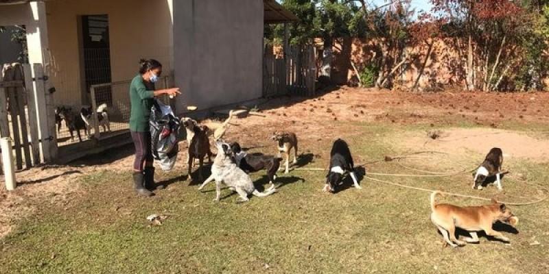 ONG cria campanha online em busca de recursos para manter abrigo de animais