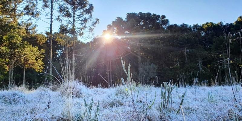 Frio em SC: geada altera paisagem e estado registra -6°C na Serra; FOTOS