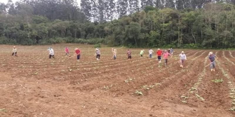 Amigos fazem mutirão para ajudar agricultor com a lavoura no interior de Orleans