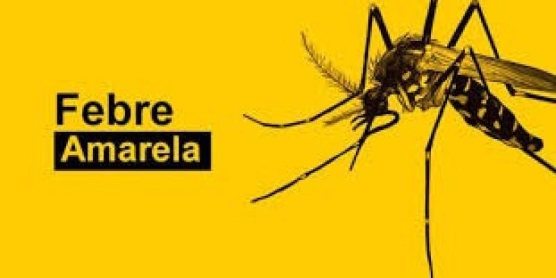 Santa Catarina: aumentam casos de macacos mortos por febre amarela