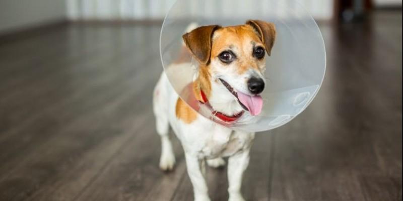 Campanha de castração de animais superou expectativa em Treze de Maio