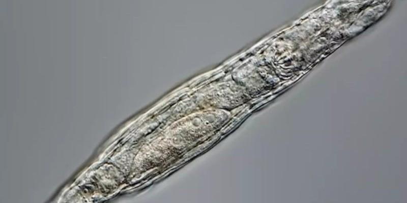 Animal que passou 24 mil anos congelado acorda em 2021; entenda