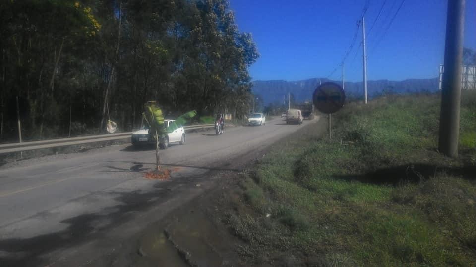 Morador planta bananeira na SC 390 que liga Orleans a Serra do Rio do Rastro